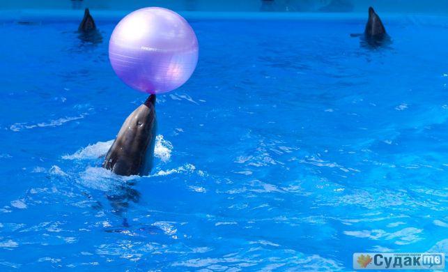 Дельфинарий в Судаке.